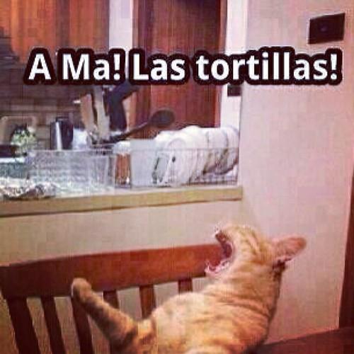 JAJAJAJJAJA #Cat #Tortillas #Mexican #Funny #Lol
