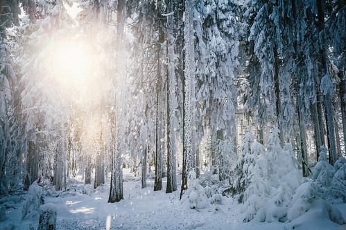 schnee trees winter sun snow cold nature forest canon germany snowy explore sunbeams winterwonderland 24105
