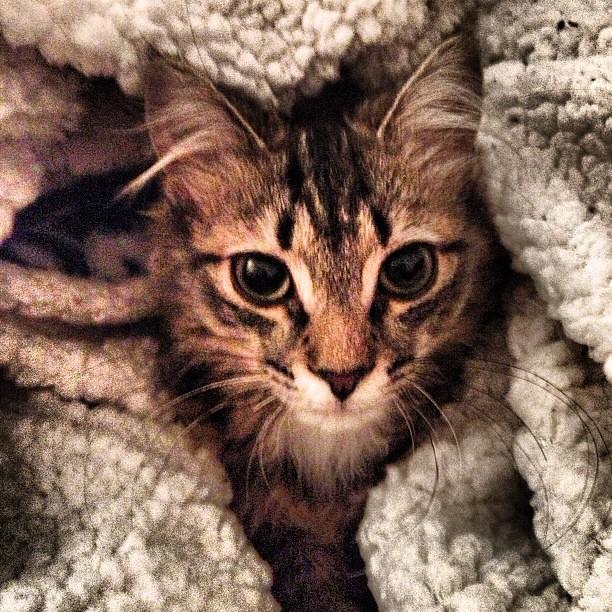 CATURDAY #cat #pet #kitty #kitten #pets #cats #catsofinst