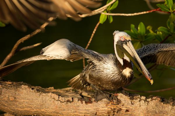 RYALE_Everglades-094