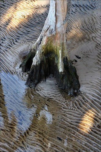 tree texture nature water landscapes sand ripples alpinegrovepark switzerlandfl