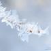 hoar-frost-detail