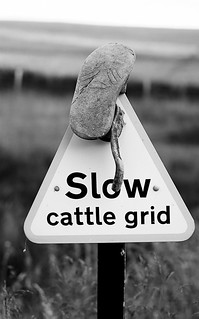 slow cattle grid sign