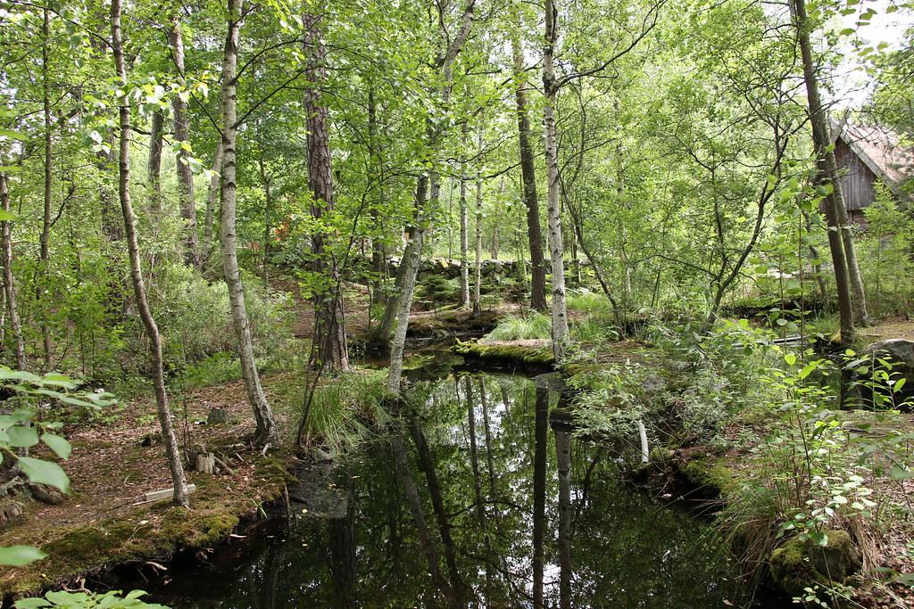 Stockholm Skansen Museum forest river