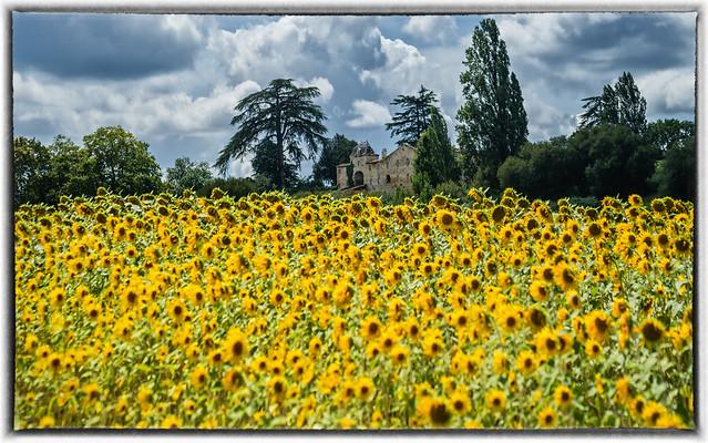 Summer dream - Dordogne -SW France