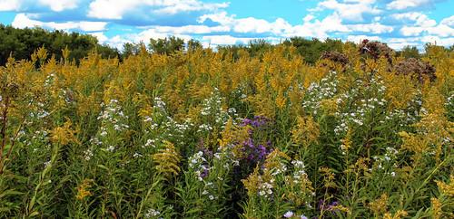 Badfish Creek Wet Prairie & Spring Seeps State Natural Area