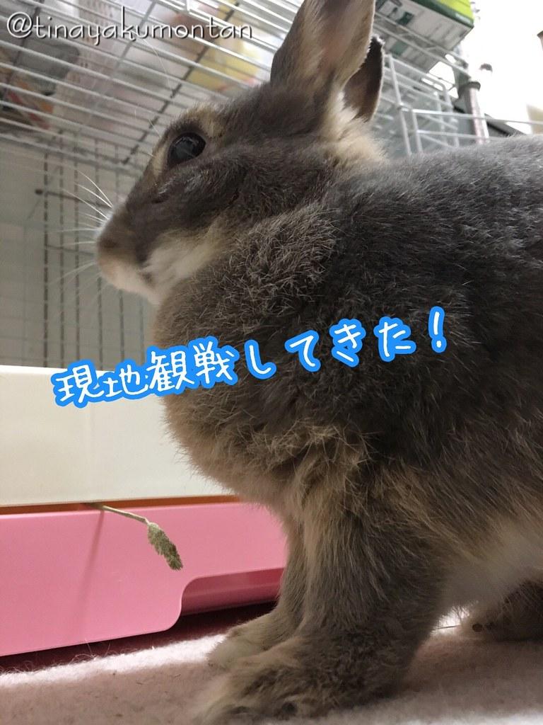 9月の神宮観戦_477