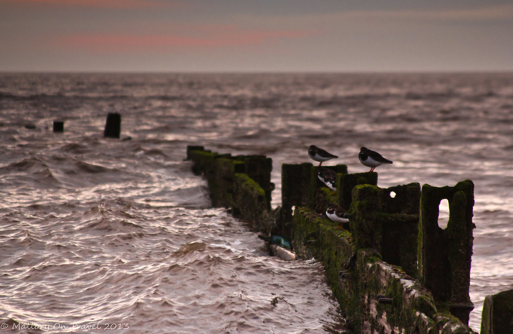 Oystercatchers at Cleveleys on the Fylde Coast near Blackpool on Mallory on Travel, adventure, photography Iain Mallory-300-5