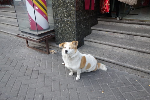 17Jan2013 shanghai