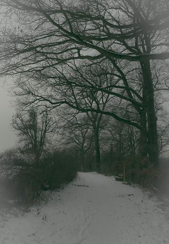 pictures winter light sun snow tree berg sunrise landscape licht sonnenuntergang pentax wiese josef landschaft bäume koblenz k5 lahnstein budbrain kurzentrum sejrek budbrainde djjupp