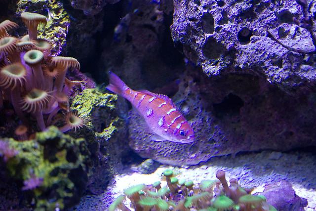 Texas State Aquarium-016.jpg