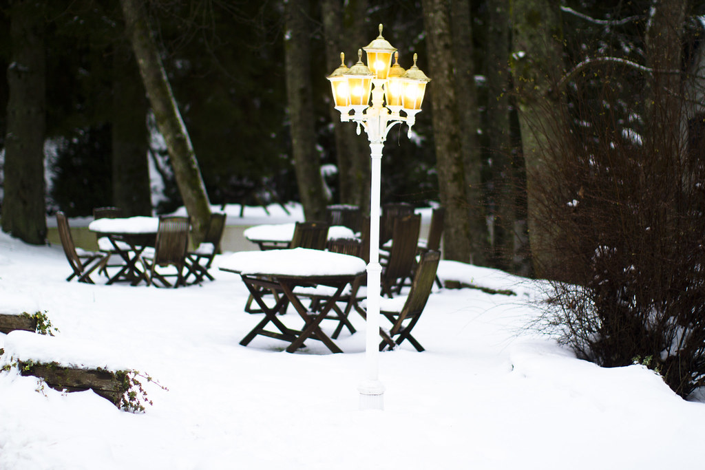 a magical snowy park in Belgium 2