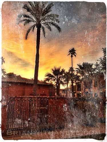 desert palm palmtrees hemingway tropics