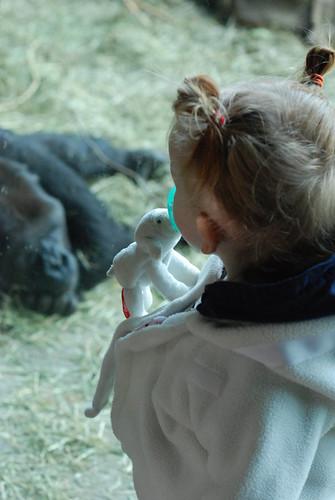 Molly Gorilla