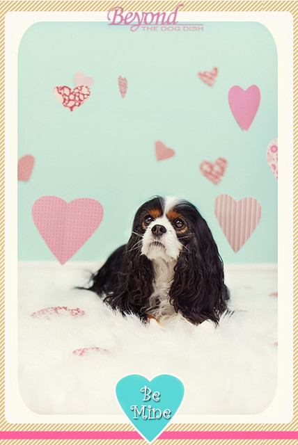 Valentine 2013 Kodee