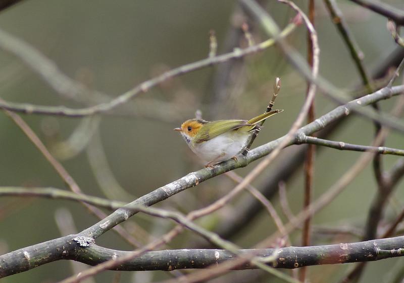 <2013> P家打鳥團首發 - 阿里山賞鳥去