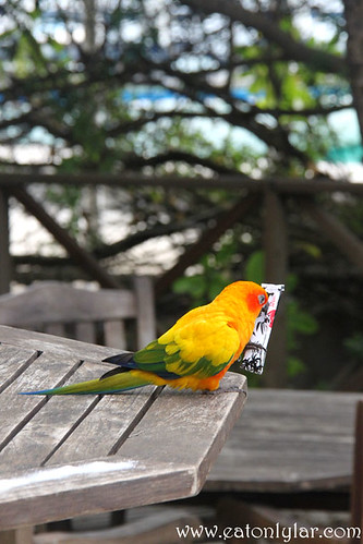 Colourful Bird, Bandos Island Resort & Spa