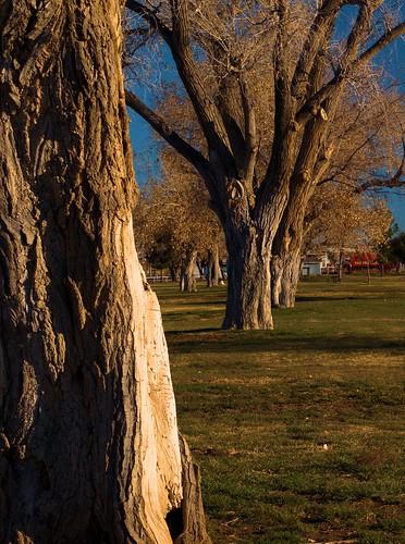 park trees newmexico grass sunrise alamogordo omd micro43