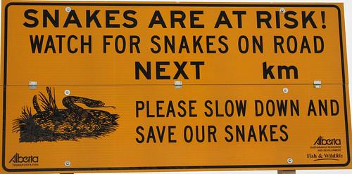 Snake!  It's A Snake!