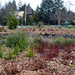 Green Stormwater Management