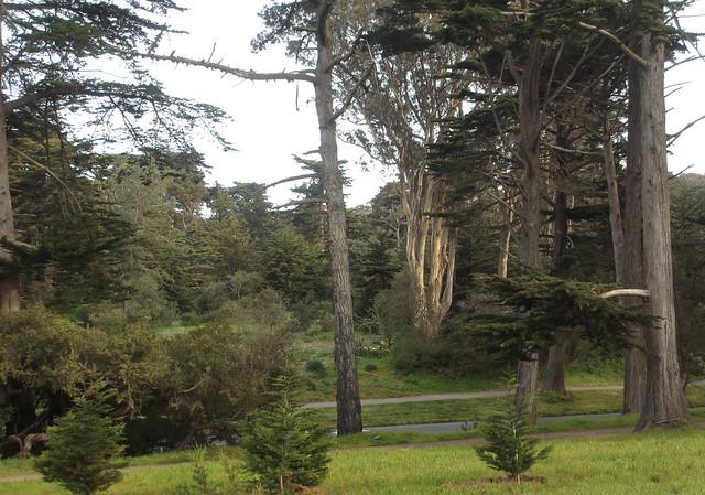 Golden Gate Park, San Francisco (2013)
