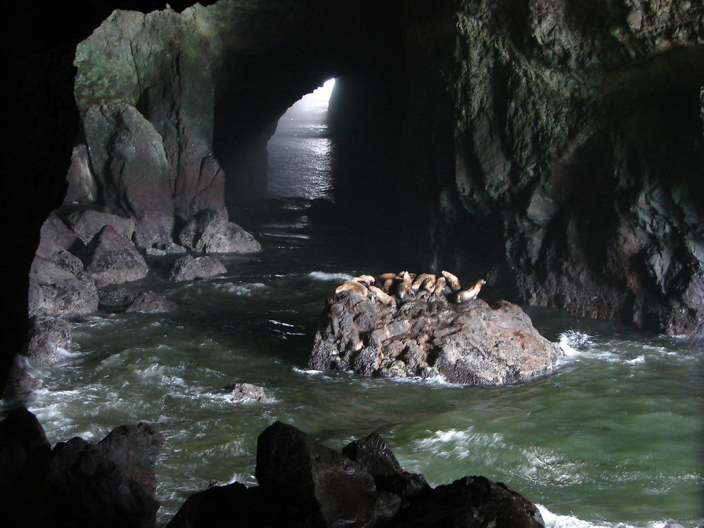 Sea Lions in Sea Lion Cave