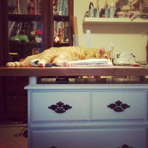 Lazy kitten!