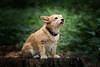 Foxi im Wald