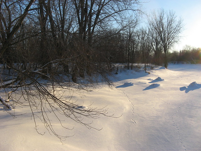 Tracks on the Frozen River
