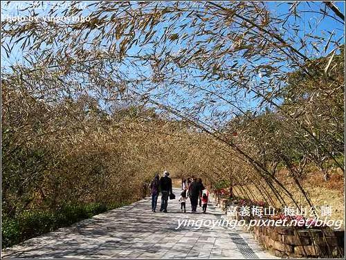 嘉義梅山_梅山公園20130106_R0071399