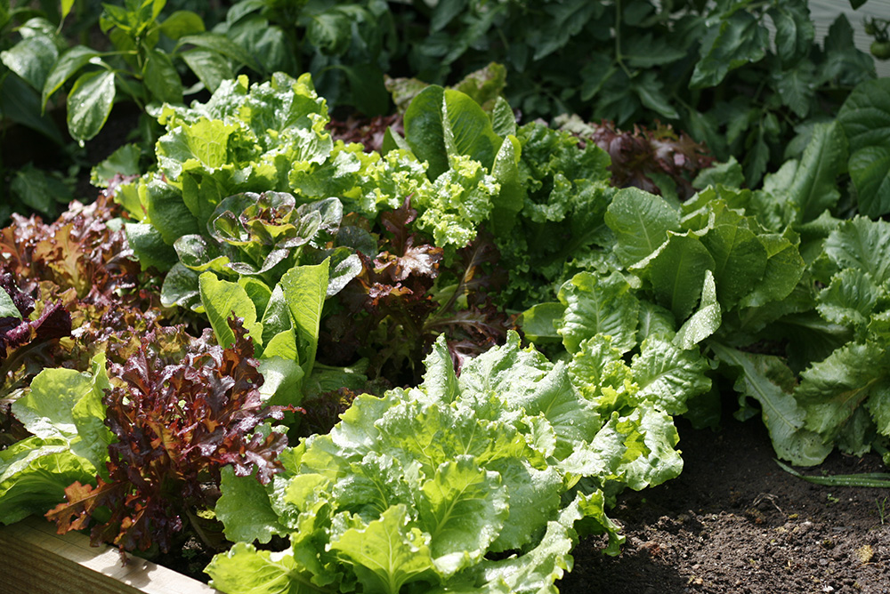 Garden - Summer 2012-13