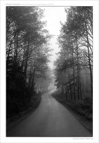road street leica blackandwhite plants mist tree classic film grass sign fog landscape novascotia forrest kodak tmax d76 epson m6 100asa v700 biogon352zm zeissbiogon235zm roll0023 zeissplanar250zm