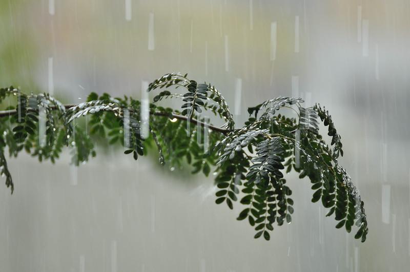 Rain in Kuala Lumpur
