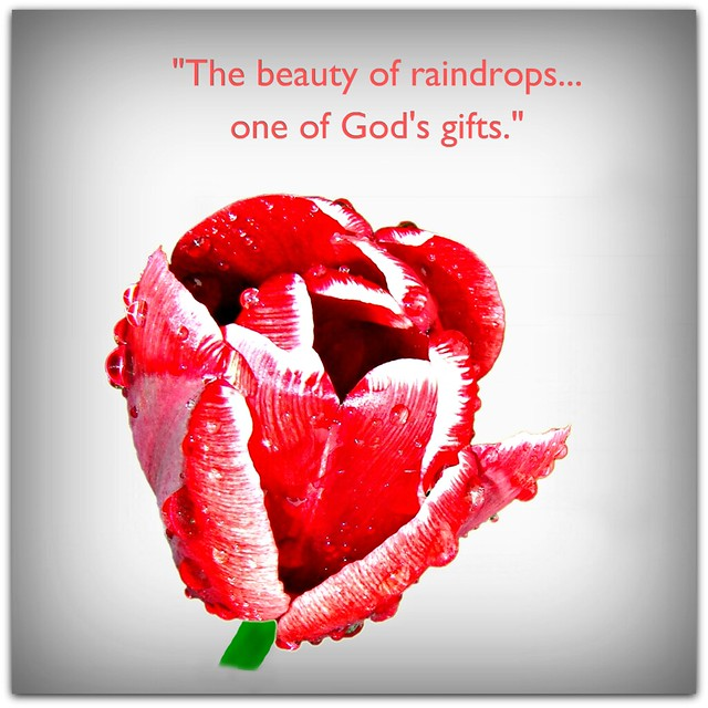 """The beauty of raindrops... one of God's Gifts."""