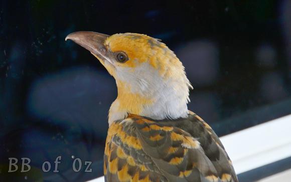 bird_6672