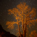 Tree and Stars, Zion NP