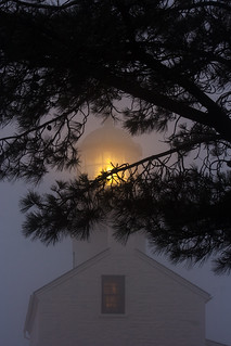 The Old Point Loma Lighthouse and torrey pine tree branches