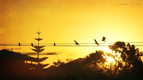 sunset australia perth western galah warnbro