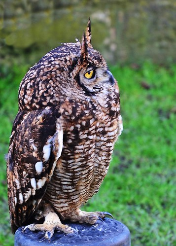 Eagle Owl 2 by birbee