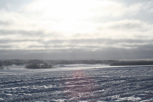 Field and snow by Sundinska