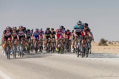Tour Of Qatar 2013