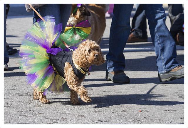 Soulard Pet Parade 2013-02-03 17