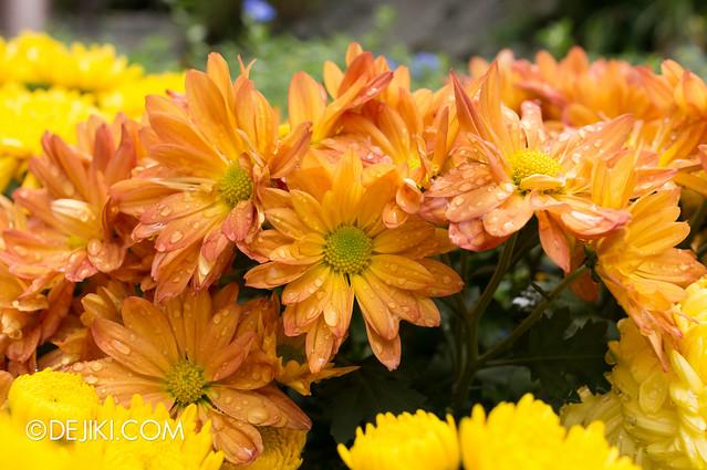 Sentosa Flowers 2013 - Freshly Wet