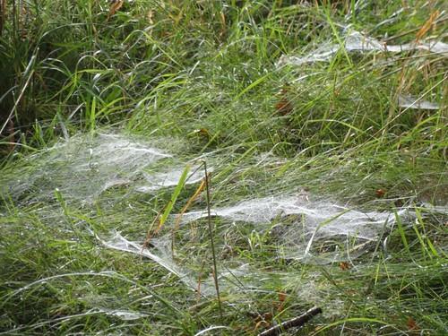 Spinnweben 1