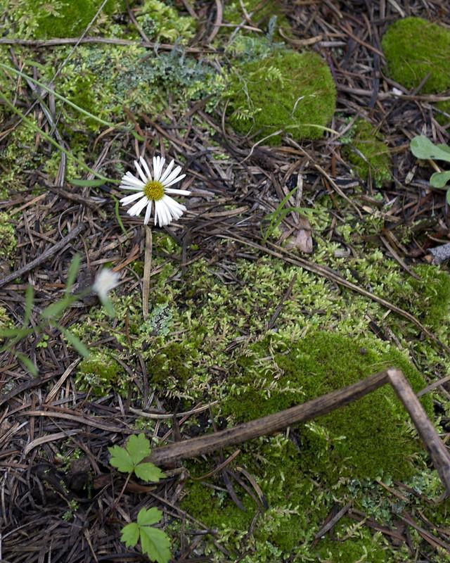 Flower_0831