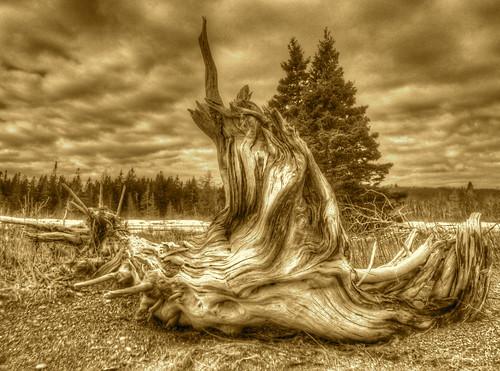Driftwood Sepia