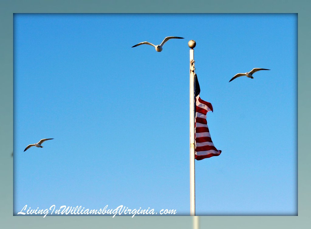 Flag and Gulls