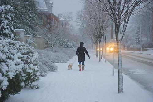 Walking dog in Winter Storm by Armadillo Commander via I {heart} Rhody