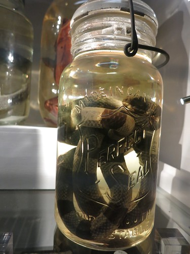 Sea snake in a jar