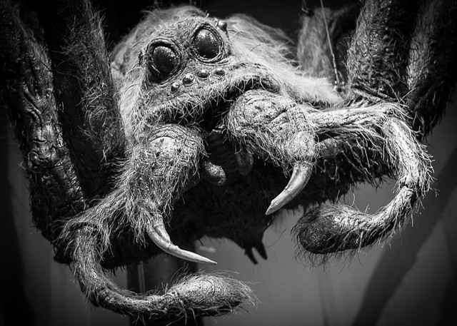 Aragog Animals Insects